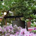 photo of the UGA arch in spring